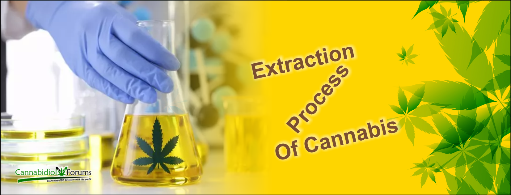 [Image: extraction-process-of-cannabis.png]